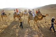 Oaza Kfar Hanokdim - przejażdżka na wielbłądach