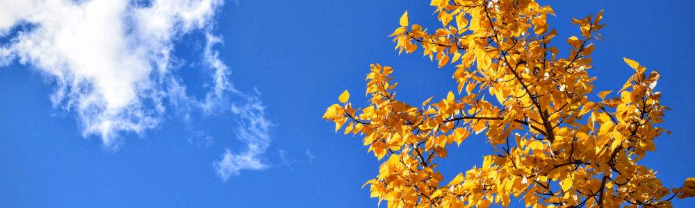 pory roku, sezony